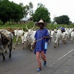 Stop heightening the Agogo and Fulani feud